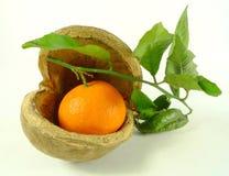 Tangerines в двух словах Стоковая Фотография RF