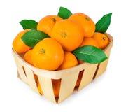 Tangerines в корзине изолированной на белизне Стоковое Изображение