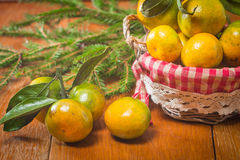 Tangerines в плите и ветви Coniferous Стоковая Фотография