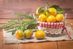 Tangerines в плите и ветви Coniferous Стоковое Изображение