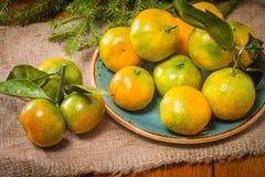 Tangerines в плите и ветви Coniferous Стоковые Фото