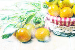 Tangerines в плите и ветви Coniferous Стоковые Фотографии RF