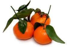 3 tangerines изолированного на белой предпосылке Стоковое Изображение