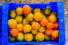 Tangerines и апельсины, готовые быть сжатым Стоковое Изображение