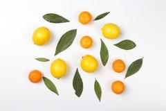 Tangerines и лимоны с листьями на белой предпосылке Стоковая Фотография RF