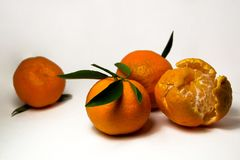 Tangerines на белой предпосылке с яркими ыми-зелен листьями Взгляд со стороны, конец вверх Reticulata цитруса Стоковые Изображения
