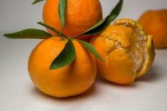 Tangerines на белой предпосылке с яркими ыми-зелен листьями Взгляд со стороны, конец вверх Reticulata цитруса Стоковые Изображения RF