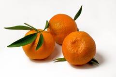 Tangerines на белой предпосылке с яркими ыми-зелен листьями Взгляд со стороны, конец вверх Reticulata цитруса Стоковое Изображение