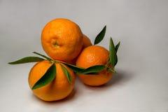 Tangerines на белой предпосылке с яркими ыми-зелен листьями Взгляд со стороны, конец вверх Reticulata цитруса Стоковая Фотография