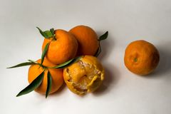 Tangerines на белой предпосылке с яркими ыми-зелен листьями Взгляд со стороны, конец вверх Reticulata цитруса Стоковые Фотографии RF