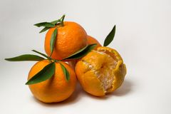 Tangerines на белой предпосылке с яркими ыми-зелен листьями Взгляд со стороны, конец вверх Reticulata цитруса Стоковые Фото