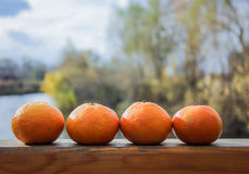 Tangerines на таблице в ряд Стоковое Фото