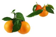 tangerines померанцев clementines Стоковые Изображения