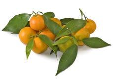 tangerines предпосылки белые Стоковые Изображения
