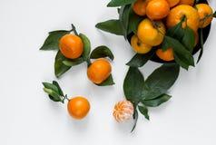 tangerines предпосылки белые Стоковые Фото