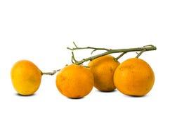 Tangerines при ветвь изолированная на белизне Стоковые Фото