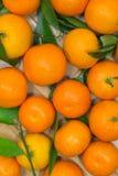 Tangerines с зелеными листьями на светлой предпосылке Стоковое Изображение RF