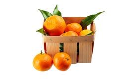 Tangerines с листьями в корзине изолированной на белой предпосылке Стоковые Фото