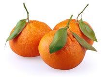Tangerines с листьями на белизне Стоковые Изображения