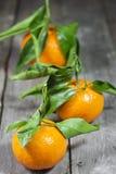 Tangerines с листьями Стоковые Фотографии RF
