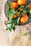 Tangerines с листьями Стоковая Фотография