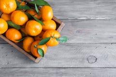 tangerines fotografia royalty free