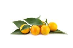 tangerines Arkivbild