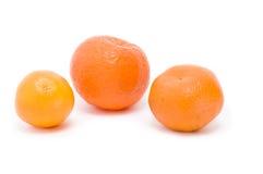 Tangerines. Orange tangerines in  peel before cooking and eating Royalty Free Stock Image