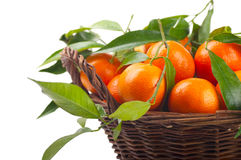 Free Tangerines Royalty Free Stock Photography - 17199237
