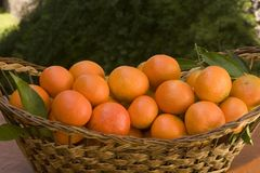 Tangerines Stock Image