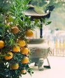 tangerines obraz royalty free