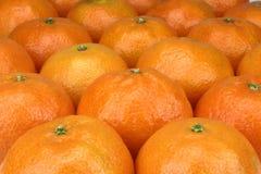 tangerines Royaltyfri Fotografi
