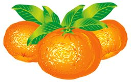 Tangerines. Raster version of vector image of tangerines Stock Photography