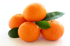 Tangerines Obrazy Royalty Free