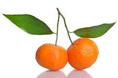Tangerines Стоковые Фотографии RF