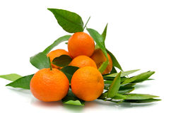 Tangerines. On a branch with leaves Royalty Free Stock Photo