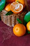 Tangerines. Royaltyfri Foto