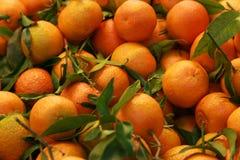 tangerines Fotografering för Bildbyråer