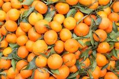 Πορτοκάλια και tangerines Στοκ Φωτογραφία