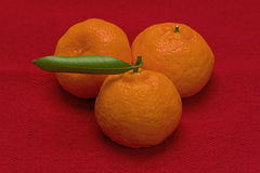 tangerines Obraz Stock