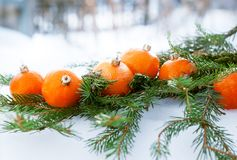 Tangerines as Fir-tree Toy on a Branch of Coniferous Royalty Free Stock Photo