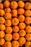 Tangerines background Stock Images