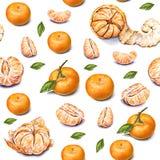 tangerines banki target2394_1_ kwiatonośnego rzecznego drzew akwareli cewienie Dojrzały obrany tangerine handwork owoce tropikaln Obrazy Stock