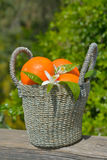 Tangerines in a basket Royalty Free Stock Photos
