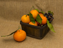 Tangerines in the Box Royalty Free Stock Images