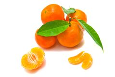 Tangerines on a branch Royalty Free Stock Image