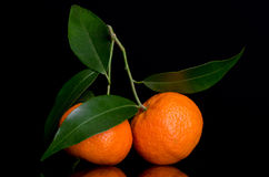Tangerines on a branch with leaves Royalty Free Stock Images