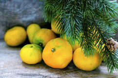 Tangerines and brunch of christmas tree Stock Image