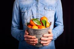 Tangerines bucket in hands Royalty Free Stock Photo