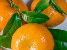 Tangerines closeup. Fresh tangerines closeup with leaves stock image